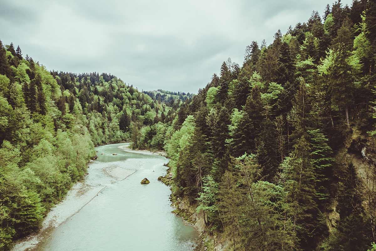 Vorarlberger Urwald